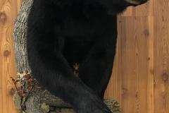 bear-half-2