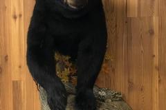 bear-half-mount