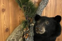 bearshoulder