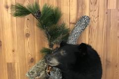 bearshoulder2