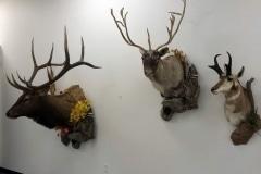 elk,caribou
