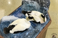 eider-water-wave-scene-taxidermy-4