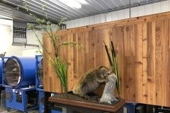 beaver1-Copy