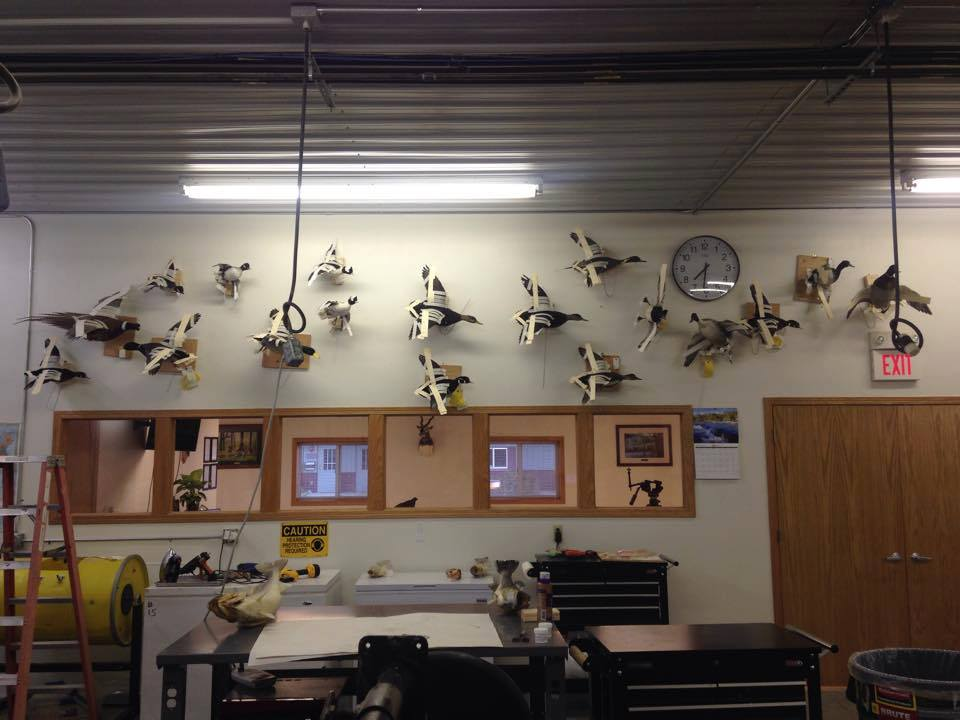 Birds drying