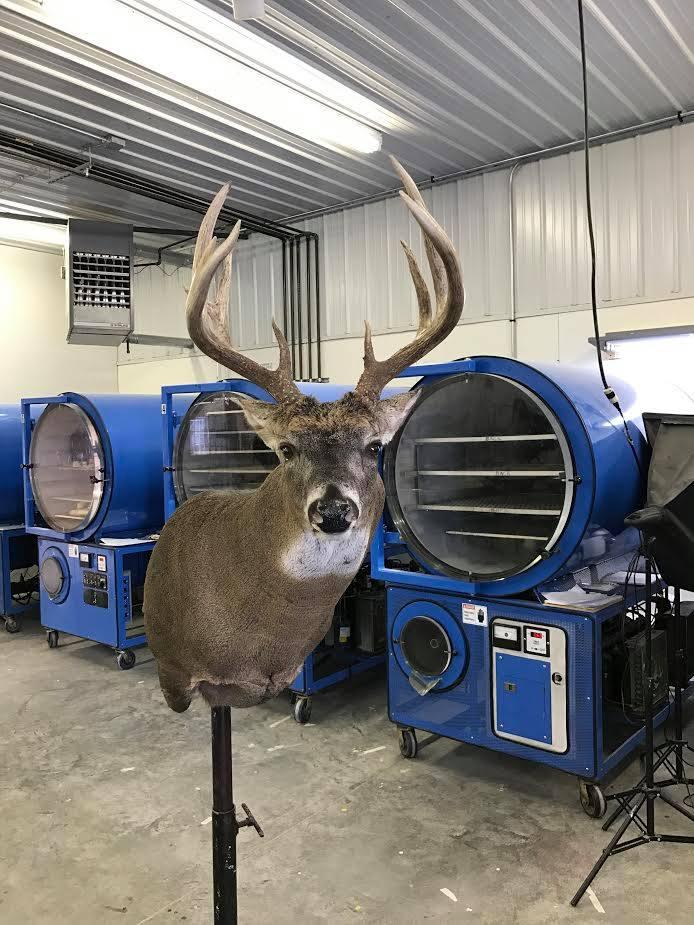 Deer drying