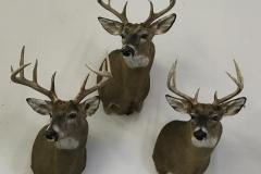 deer-group