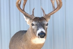 deer10