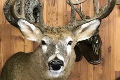 deer17