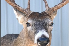 meder deer eyes 2