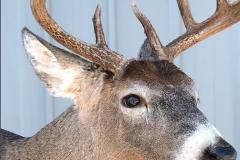 meder deer eyes