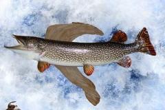 fish10 (1)