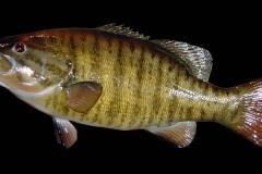 fish17 (1)