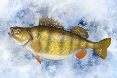 perch replica