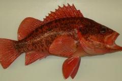 rockfish replica