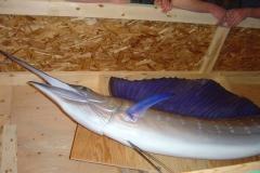sailfish replica