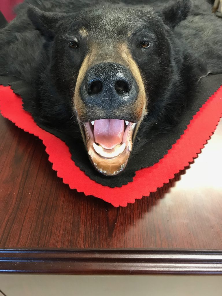 Bear Rugs - Stehling's Taxidermy