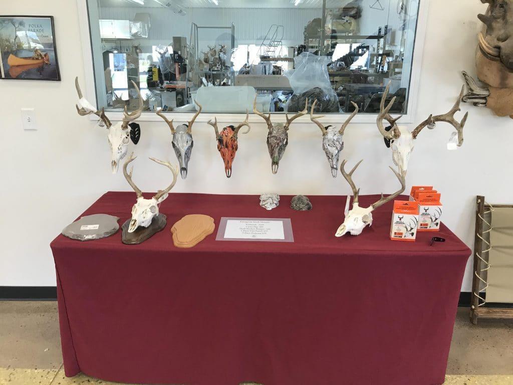 whitetail skull mounts